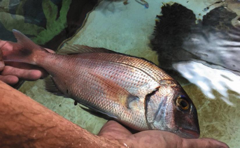 Aquarium de la Cité de la Mer